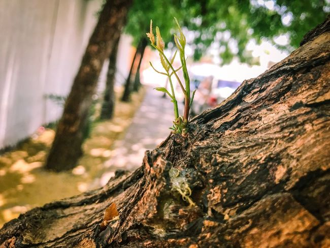 Tree Trunk Tree Nature Bark Focus On Foreground Close-up Growth No People Textured  Outdoors Day Branch Beauty In Nature Sky Dead Tree First Eyeem Photo Plant Tree Grass Growth Beauty In Nature High Angle View Visual Feast The Street Photographer - 2017 EyeEm Awards The Photojournalist - 2017 EyeEm Awards