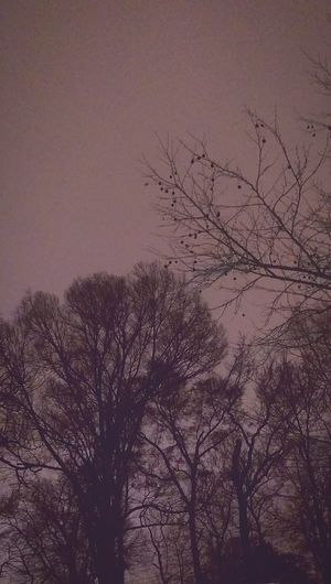 Taking Photos Enjoying Life Check This Out Latepost Snow ❄ 30daysofnight