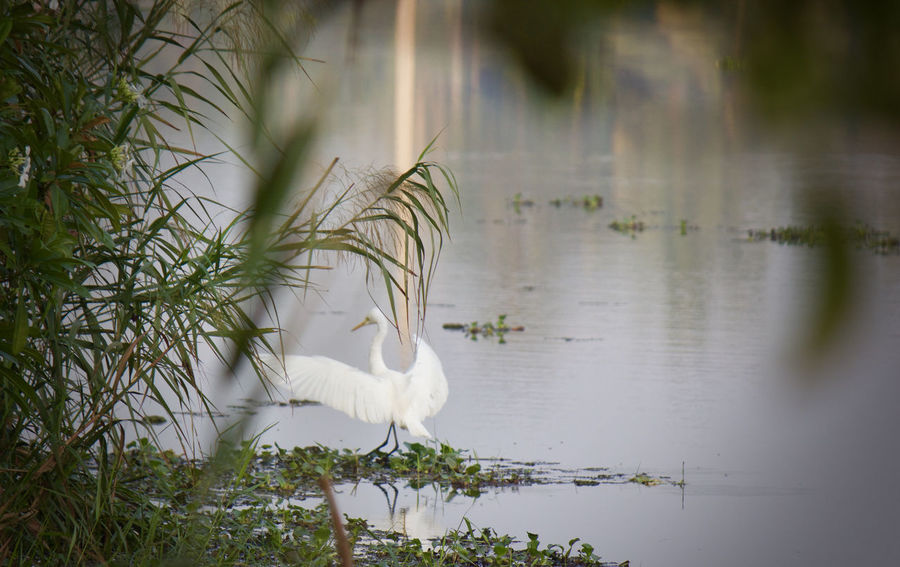 Animal Beauty In Nature Bird Heron Natural Beauty Nature Outdoors Plant Reflection Scenery Scenic Scenics Shadow Tranquil Scene Tranquility Water Water Reflections Waterfront Wild Wildlife Wildlife & Nature Vella Kokku