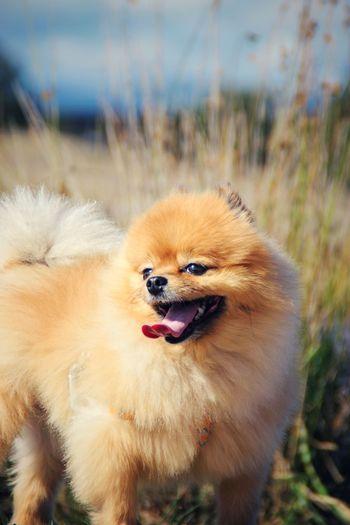 Cute Dog in
