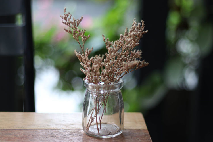 Cafe Close-up Cultures Day Flower Horizontal Indoors  Nature No People Plant Table