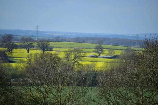 Taking Photos Landscape Fields Harlaxton Trees Contrast Nikon D5500