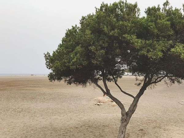 Tree Land Tree Plant Beach Sky Water Tranquility Sand Sea Beauty In Nature Tranquil Scene Nature Day No People Outdoors
