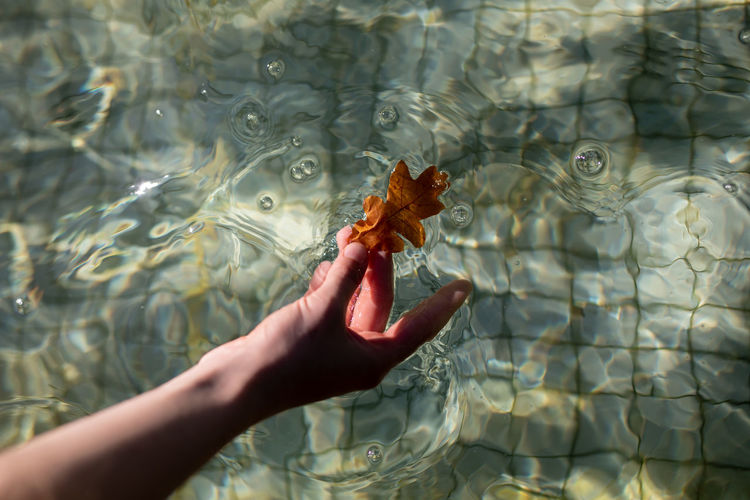Cropped hand holding leaf in swimming pool