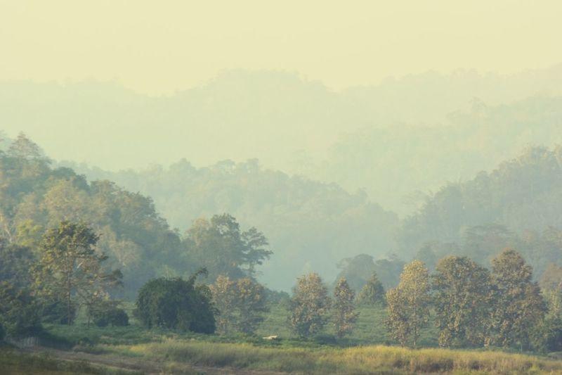 Trees Misty
