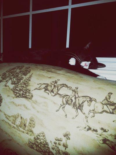 Tuxedocat Zen Attitude Enjoying Life Catdreams Catlife Preciousthecat Mybaby❤ Catporn Catlovers
