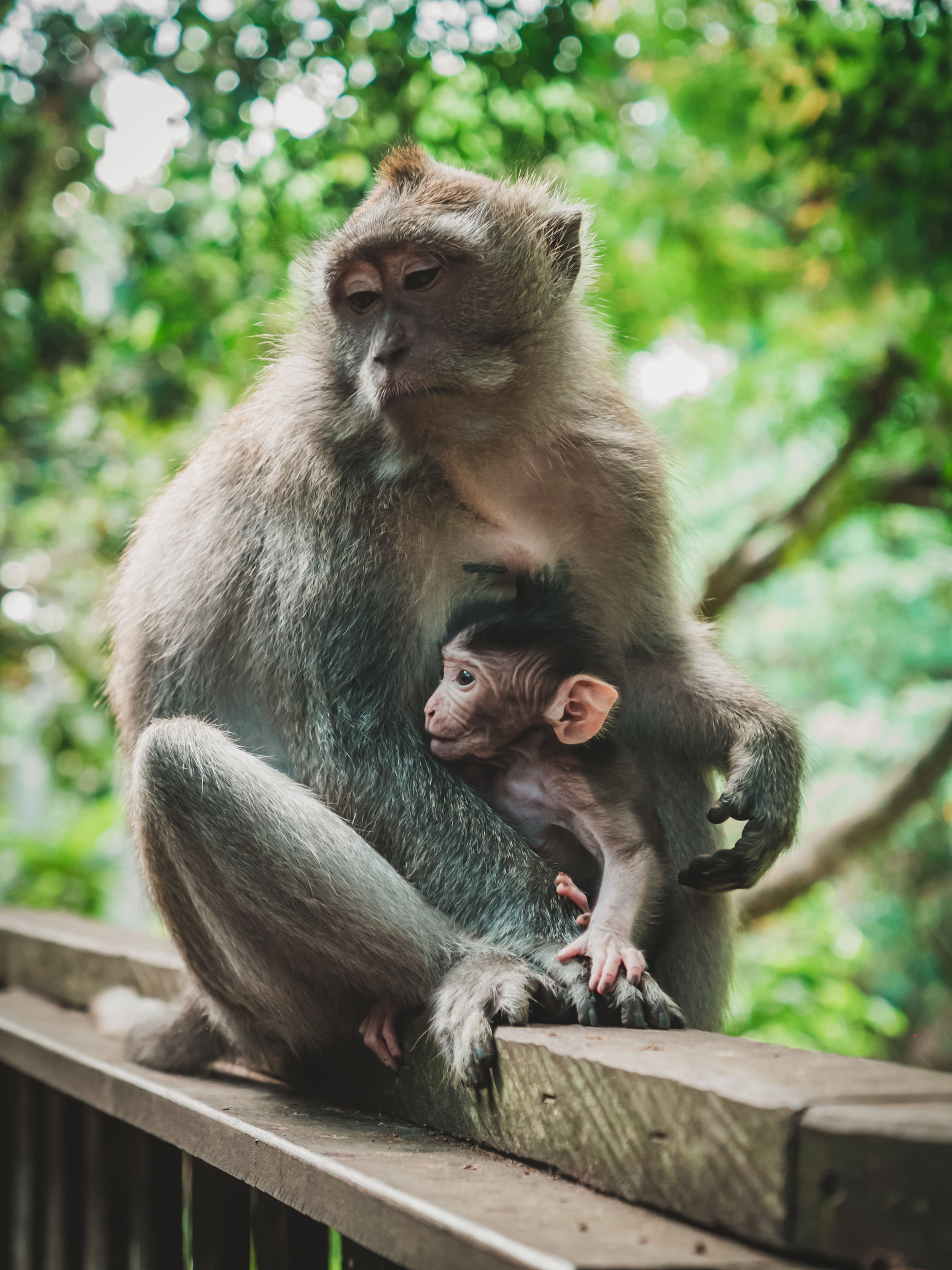 group of animals, animal wildlife, animal, mammal, animals in the wild, animal themes, young animal, two animals, animal family, vertebrate, tree, primate, monkey, togetherness, female animal, day, young, focus on foreground, baby, nature, outdoors, care