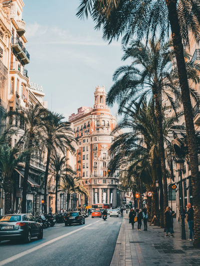 City street by palm trees and buildings against sky