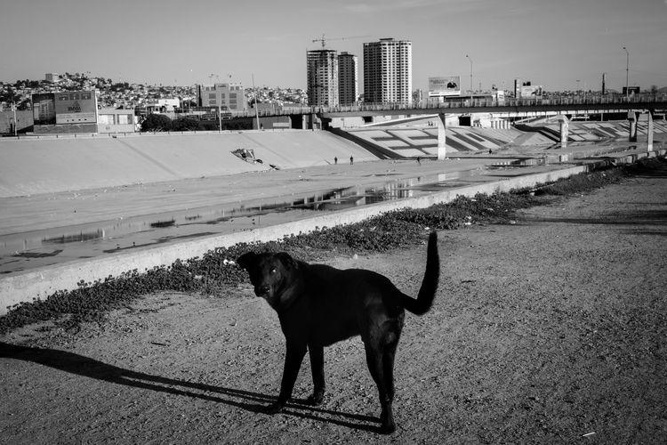 Dog standing on bridge in city against sky