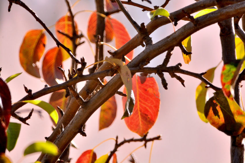 Autumn Colors Autumn Leaves Beauty In Nature Branch Close-up Day Flower Freshness Growth Nature No People Orange Color Outdoors Plant Tree