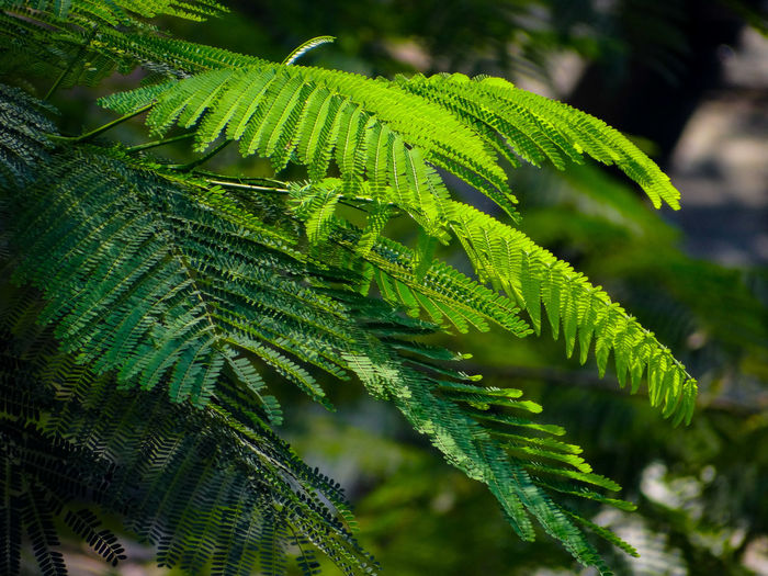 GREENERY Nature Rich Green Tones Greenery Scenery Lush Foliage Freshness Greenery Tree Leaf Branch Close-up Green Color Plant Lush - Description Leaf Vein Natural Pattern Leaves Plant Life