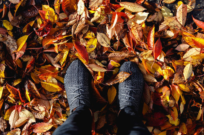 Autumn in London Autumn Plant Part Change Leaf Leaves Dry Shoe Human Leg Low Section Real People Day Nature High Angle View One Person Falling Human Body Part Personal Perspective Unrecognizable Person Directly Above Outdoors Human Foot Autumn Collection Maple Leaf Fall London Autumn Mood