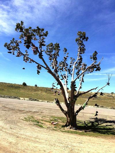 Shoe tree Hwy 395 colesprings nevada