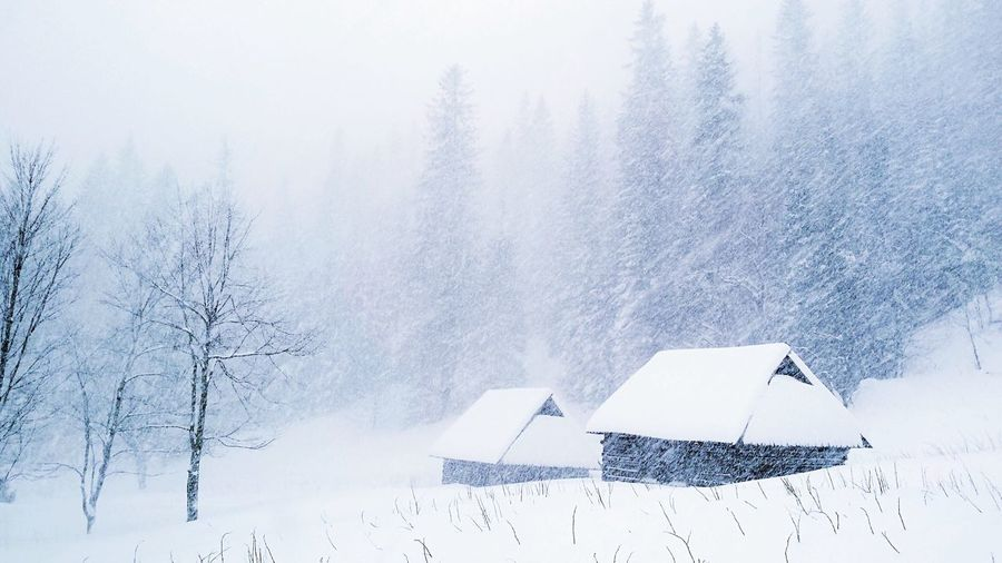 House In The Mountains Winter Weather Cold Temperature Snow Season  Tree Tranquil Scene Covering Beauty In Nature Tranquility Fog Scenics Nature House White Non-urban Scene Day Branch Outdoors Poland Snowing Monochrome Photography My Year My View Snow Sports