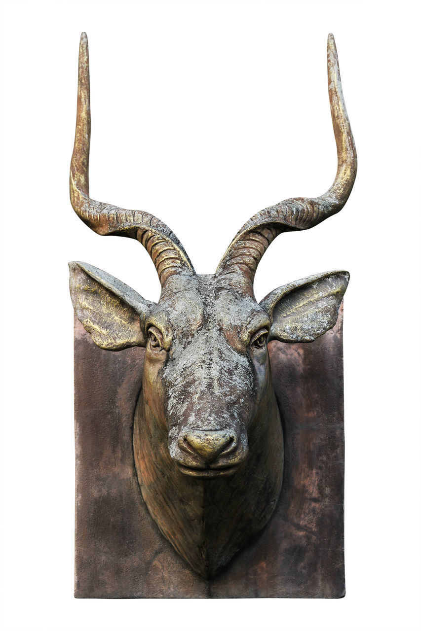 animal, animal wildlife, animal themes, one animal, studio shot, horned, mammal, looking at camera, white background, indoors, close-up, portrait, no people, animal body part, taxidermy, animal head, antler, front view, single object, mounted