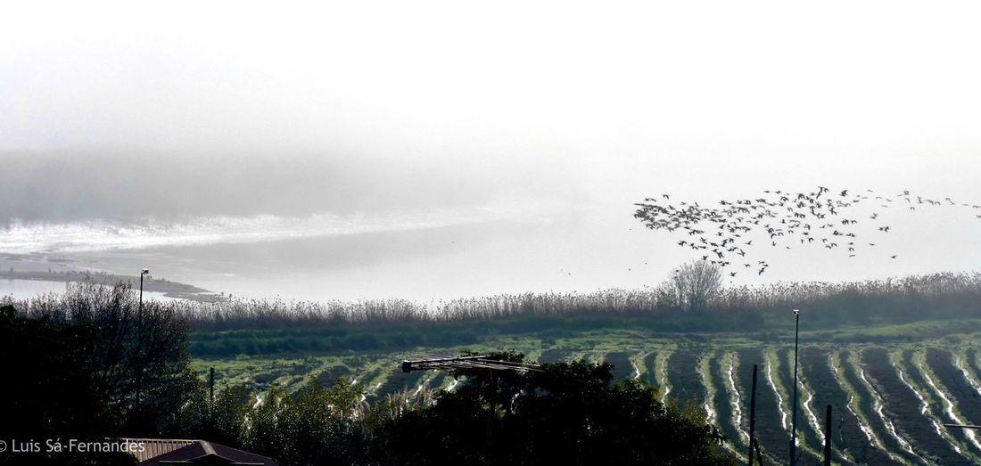 Fim de tarde Tree Plant Sky No People Day Tranquility Outdoors Flock Of Birds