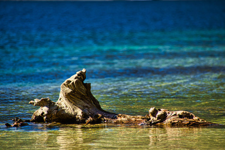 Driftwood on rock by sea