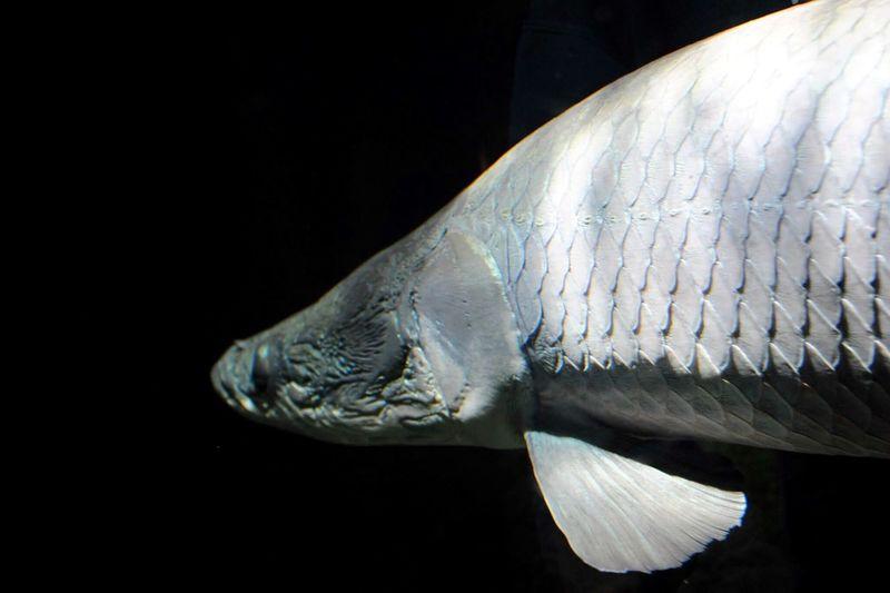 Side View Of Fish In Aquarium