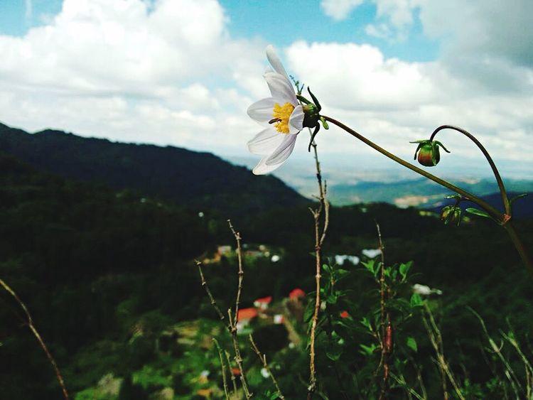 Flower Beauty In Nature Cloud Mountain Petal Growing First Eyeem Photo Hello World EyeEm Enjoying Life