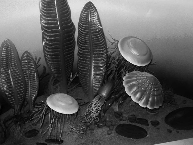 Museum Ancient Flowers Mushrooms Once In A Lifetime Traveling Check This Out
