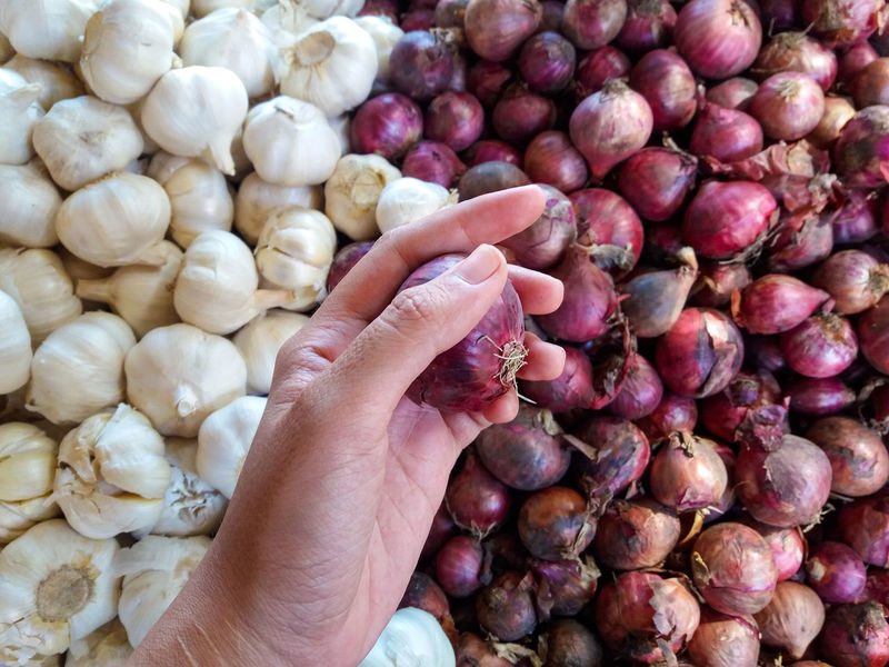 50+ Onion Pictures HD | Download Authentic Images on EyeEm