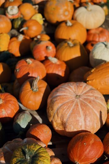 Food Food And Drink Pumpkin Vegetable Freshness Healthy Eating Large Group Of Objects High Angle View Abundance Backgrounds Still Life Full Frame Close-up Orange Color Wellbeing Choice No People Fruit Autumn Squash - Vegetable