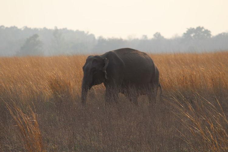 Elephant at Jim