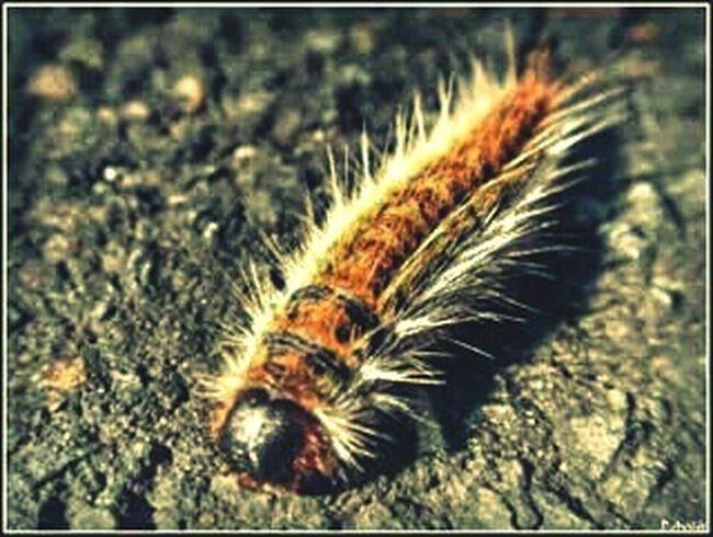 Pelo pincho... EyeEm Nature Lover Macro_collection Eyeem Fauna Streamzoofamily Macroclique EyeEm Best Shots