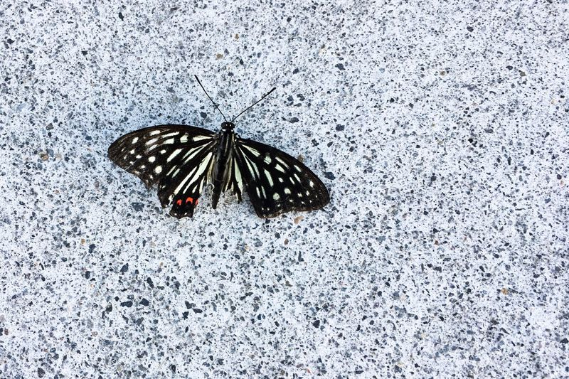 Animal Themes One Animal Animals In The Wild Insect Animal Wildlife Butterfly - Insect Animal Markings Wildlife Spotted Outdoors No People Nature Day Fragility Close-up Beauty In Nature Perching