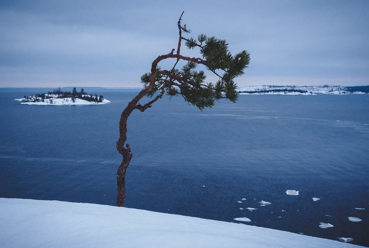 Water Sky Sea Beauty In Nature Scenics - Nature Tree Nature Tranquil Scene Tranquility No People Day Horizon Horizon Over Water Plant Cloud - Sky Outdoors Land Winter
