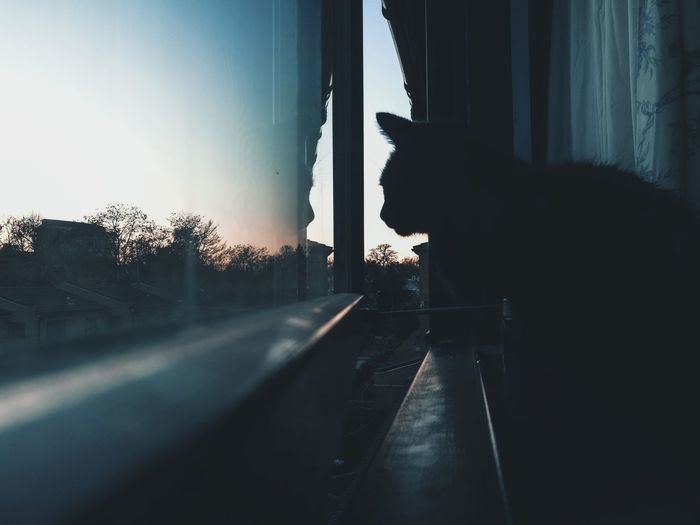Silhouette of cat looking through window