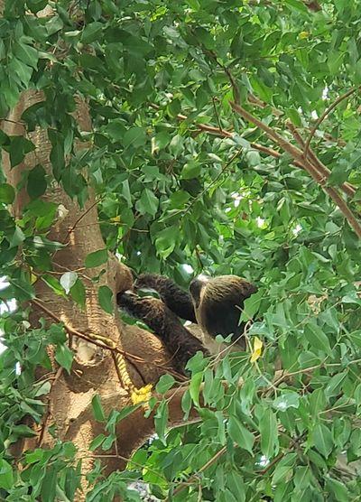 Lounging Sloth