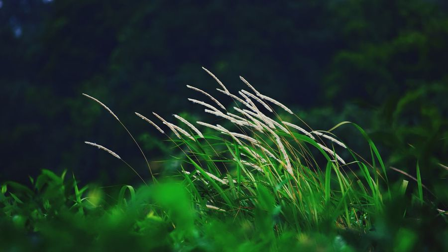 Golden Valley Nature No People Beauty In Nature Drop Outdoors Green Color Plant Water Day Freshness Growth Breeze Wind Blowing In The Wind... Fragility Close-up EyeEm Diversity Art Is Everywhere The Great Outdoors - 2017 EyeEm Awards Done That. EyeEmNewHere