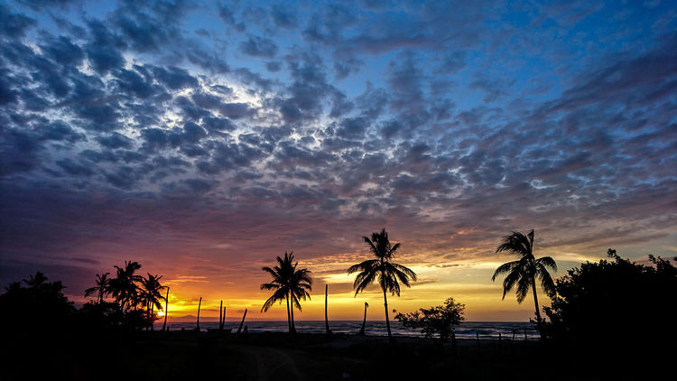 Sunset Cloud - Sky Summer No People Travel Destinations Beauty In Nature Beach Palm Tree Silhouette Sky Sea Sun Landscape Iamnewhere Columbia South America Best Life The Great Outdoors - 2017 EyeEm Awards EyeEmNewHere