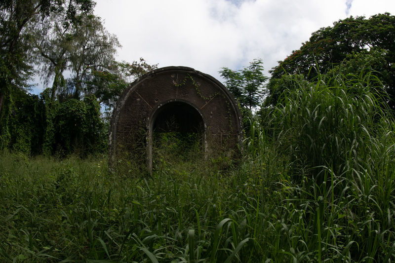 titian Plant Tree Growth Arch Architecture Nature Green Color No People Sky Grass Land Built Structure Day Cloud - Sky Abandoned Field Outdoors Tranquility History Old Arched Ruined