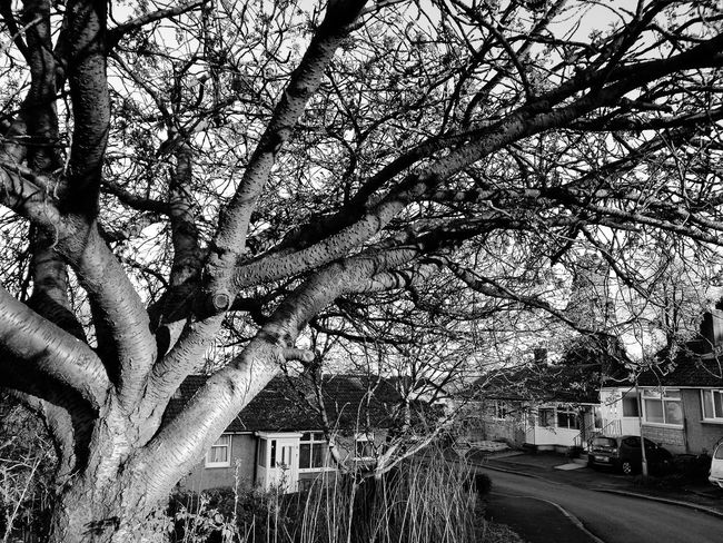 Black & White Happy Avenue Neighborhood Nice Day Light And Shadow Tree Nature Day Sunset Light - Natural Phenomenon Street Darkness And Light Walking Around Cumbia Huawei P9 Leica BYOPaper!