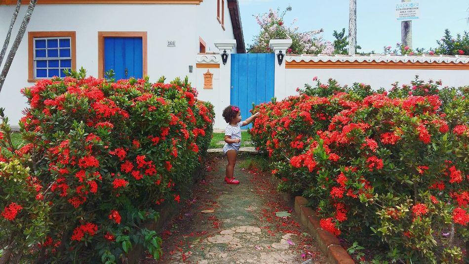 Jardimsecreto Flores Rebeca Cores Da Natureza