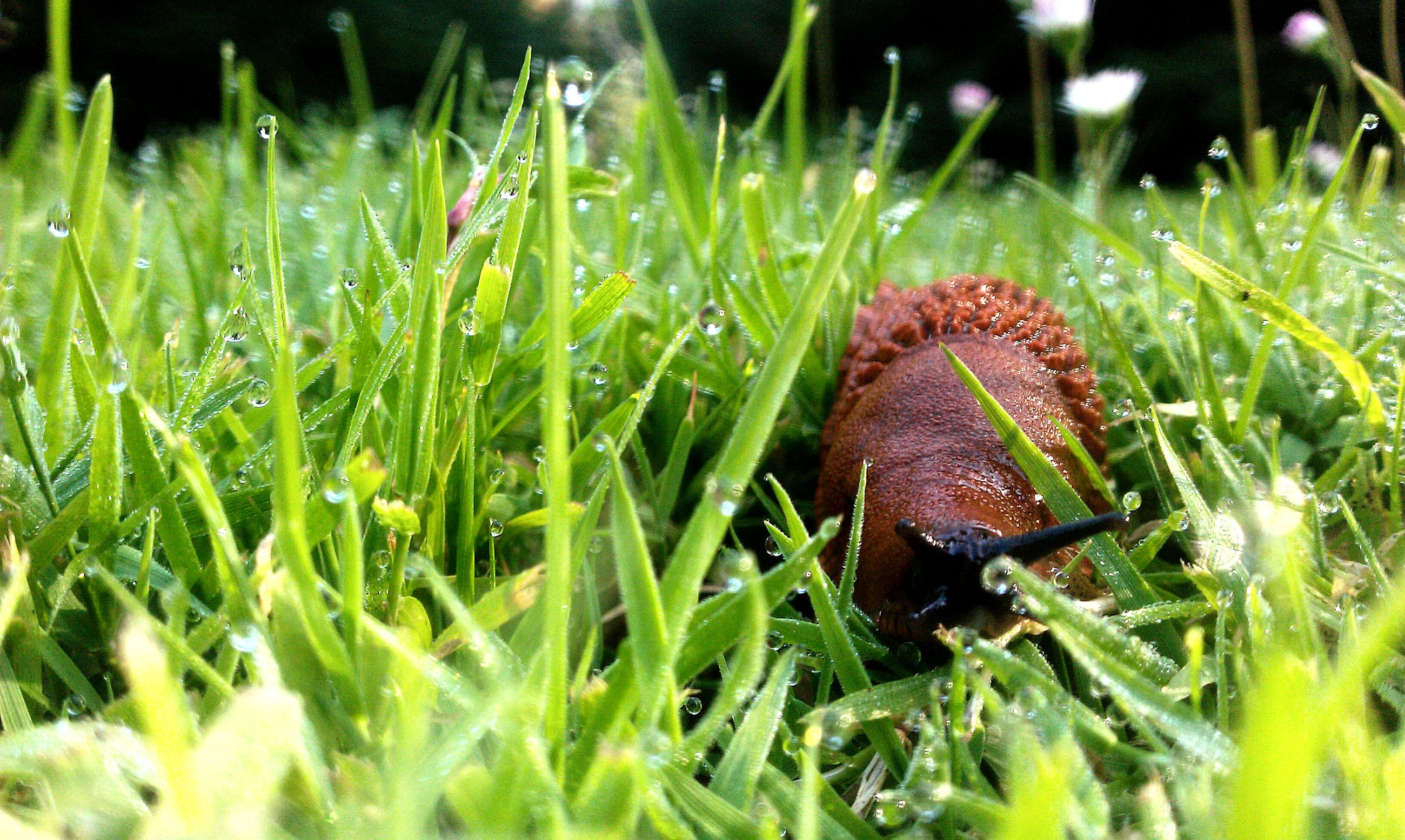 animal themes, one animal, grass, animals in the wild, wildlife, insect, selective focus, close-up, green color, nature, field, blade of grass, plant, grassy, day, wet, outdoors, growth, no people, leaf
