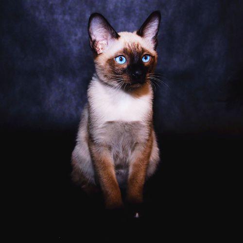 кот Cat♡ Cat Lovers Catsofinstagram Catstagram Cats котик Марс мегконский бобтеил