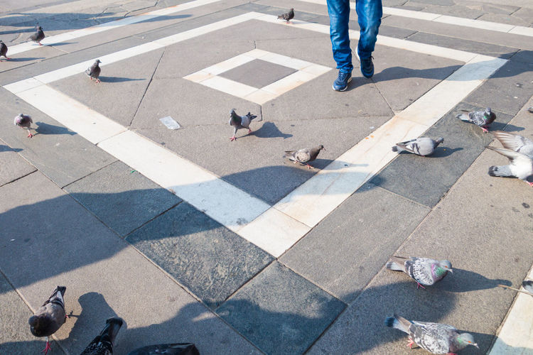 Low section of man walking on road by pigeons