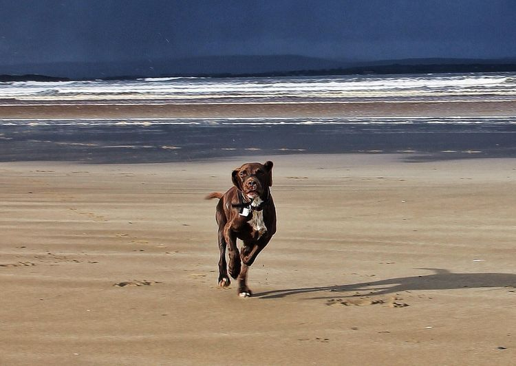 A sight that I love -- A dog without a leash. Enniscrone beach. Tadaa Community Life Is A Beach Hello World Taking Photos