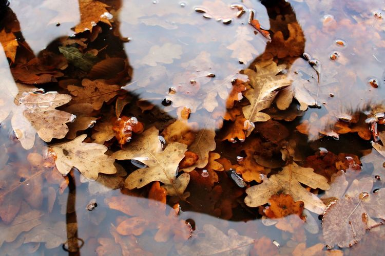 High angle view of maple leaves in lake