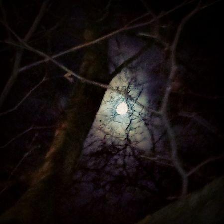 Full Moon....ahhwoooooo. Hometime TheresASheWolfInTheCloset Fullmoon Valentinesday Project365 46of365