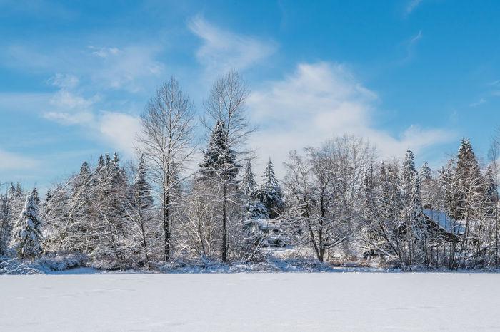 #beautifulbc #cabinhidingintrees #frozenlake #supernaturalBC Cloud - Sky Cold Temperature Day Landscape Nature No People Outdoors Scenics Sky Snow Tree Winter
