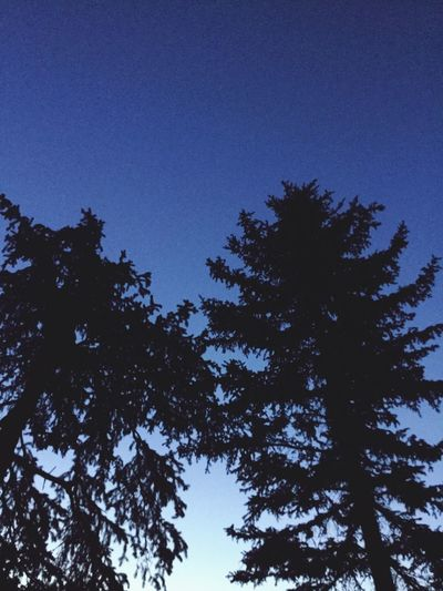 Silhouette Low Angle View Tree Nature Clear Sky Growth Blue Beauty In Nature No People Tranquility Sky Outdoors Day Blue Sky High EyeEmNewHere