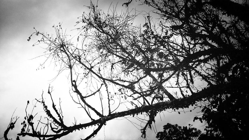 Trees Fortheloveofblackandwhite Afternoon Eyemnaturelover