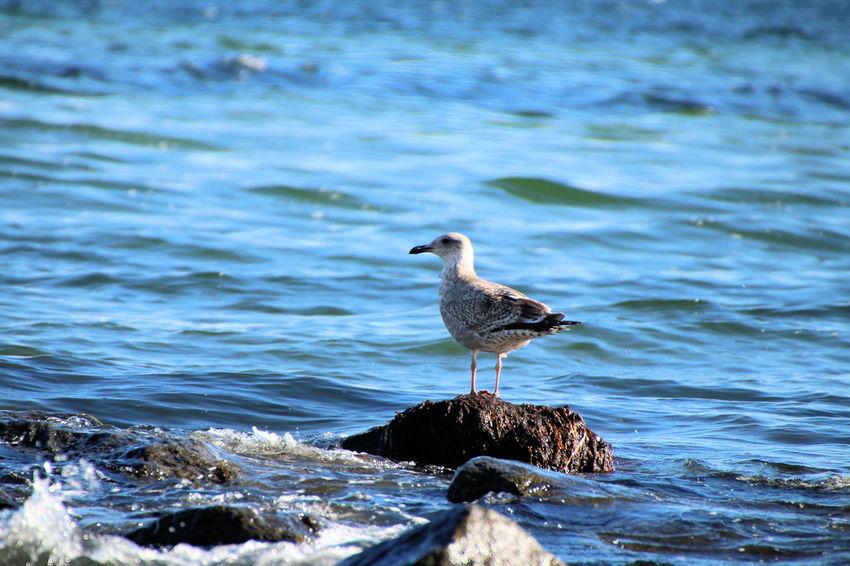 Lübecker Bucht Möwe Ostsee Schwan  Strand Tier Vogel Wasser