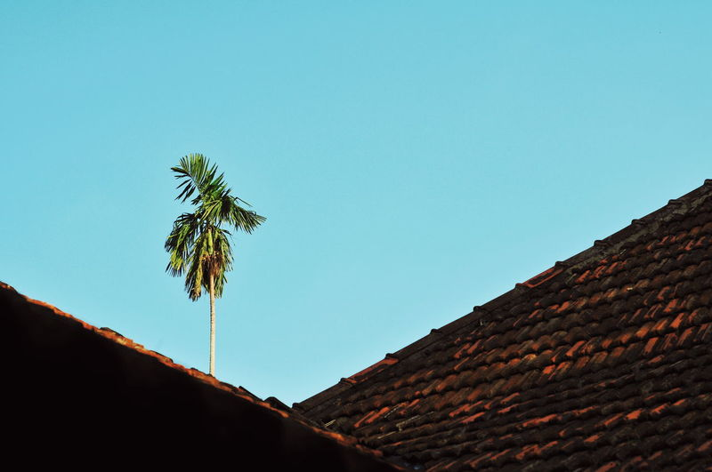Low angle view of coconut palm tree against sky