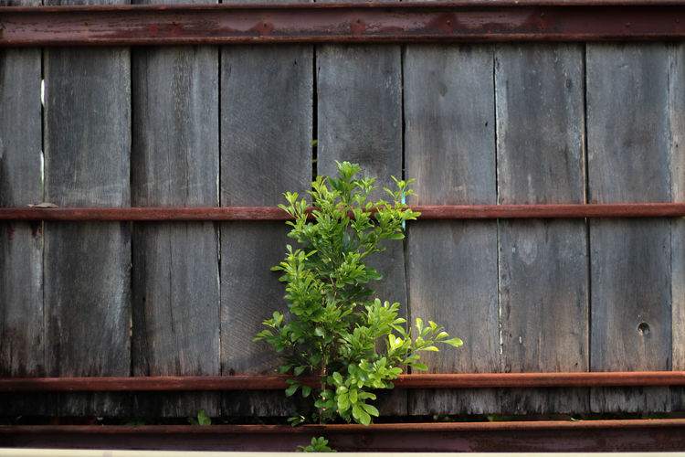 Architecture Beauty In Nature Building Exterior Built Structure Day Flower Green Color Growth Nature No People Outdoors Plant Wood - Material