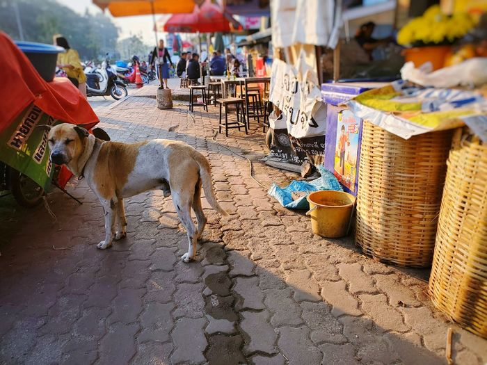 View of dogs in street market